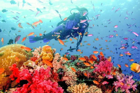 Dubai: PADI Open Water 18-meter duikbrevet