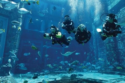 Dubai: duikervaring The Lost Chambers Aquarium Atlantis