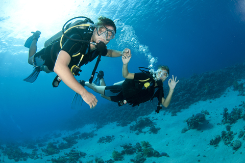Uit Dubai: Discovery Scuba Diving voor beginners In Fujairah