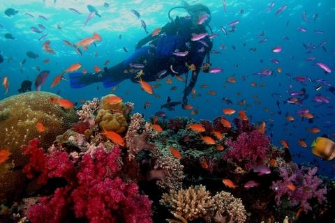 Dubai: PADI Open Water 18-Meter Duikcertificering