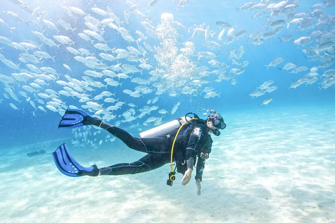 Dubai: PADI Basic Scuba Diving Course