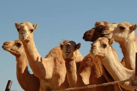 Vanuit Dubai: Al Ain tuinstad sightseeingervaring