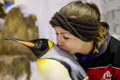 Dubai: tickets pinguïns ontmoeten in Ski Dubai