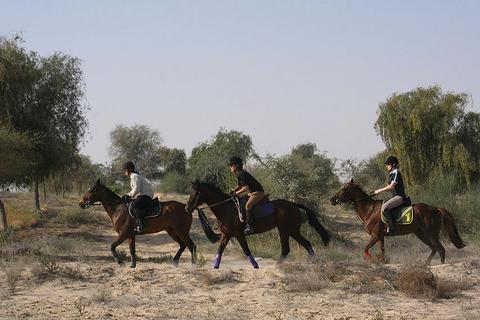 1 of 1,5 uur paardrijden Dubai Desert Park Ride