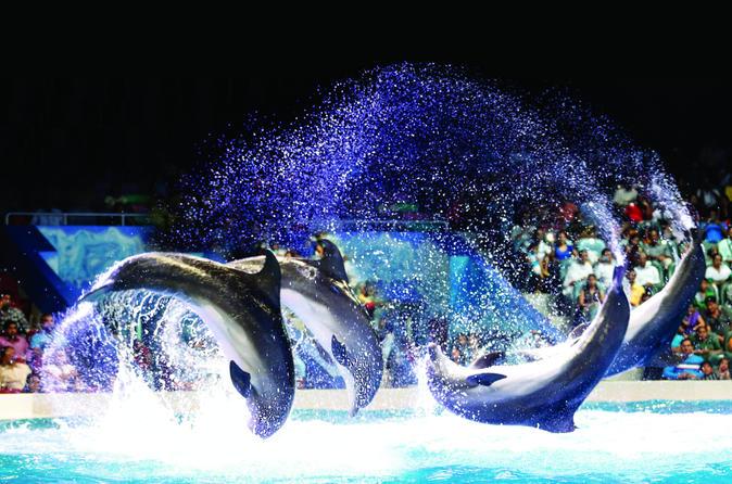 Dolfijnen- en zeehondenshow in het Dubai Dolfinarium