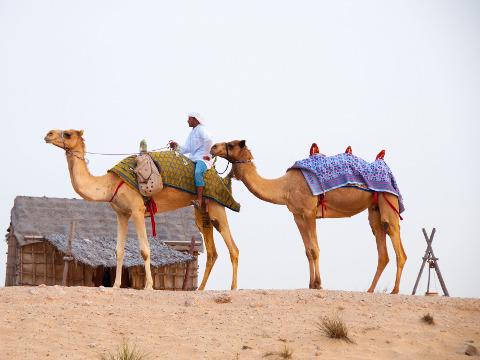 Kameelrijden in Dubai